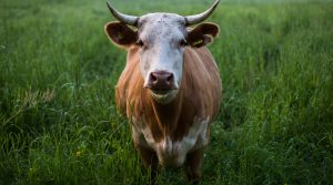 The Nutritional Value of Nose to Tail Eating