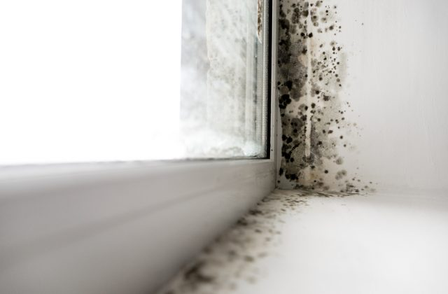 How to Detox Your Body from Mold — Naturally